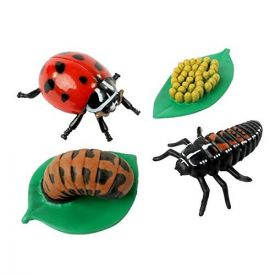 Insect Lore Ladybird Life Cycle Stages Figurines