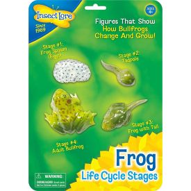 Insect Lore Life Cycle Stages Frog